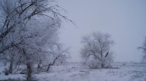Зима в Зеленом саду. Фото Н. Пирогова