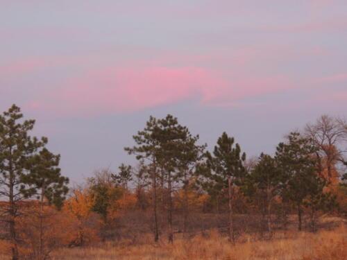 Сосновый бор. Фото Н. Пирогова